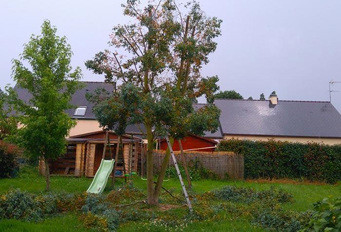 Elagage d'arbres à Fougères